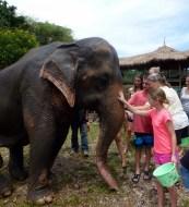 Elephant Nature Park - Chiang Mai Thailand - Save Elephant Foundation. Read more on WagonersAbroad.com