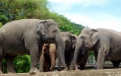 Elephant Nature Park - Chiang Mai Thailand - Save Elephant Foundation (5)