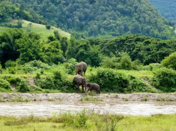 Elephant Nature Park - crossing the river