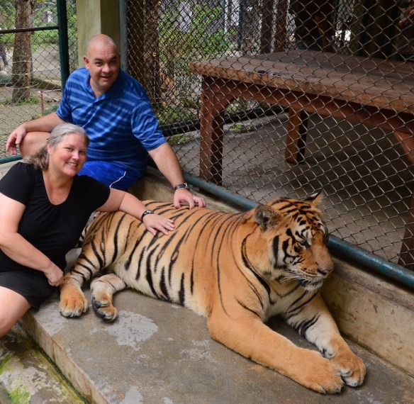 Heidi and Alan still alive and scratching tiger