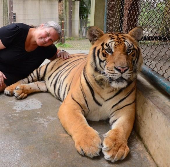 Heidi laying on tiger