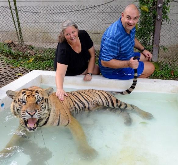 Tiger Kingdom Chiang Mai - Bathing Tiger