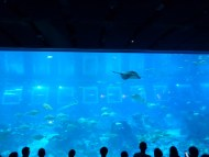 SEA-Aquarium-Experience-31