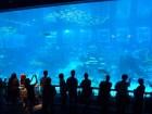SEA-Aquarium-Experience-32