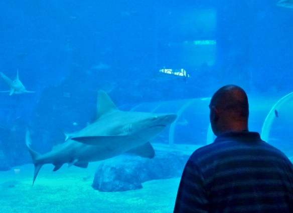 Singapore with kids - Things to do and see SEA Aquarium