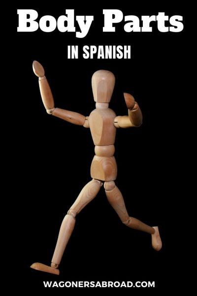 If you live in Spain or planning to visit, this will help you learn the body parts in Spanish. You never know when you may need to see a médico or doctor. Learn more on WagonersAbroad.com