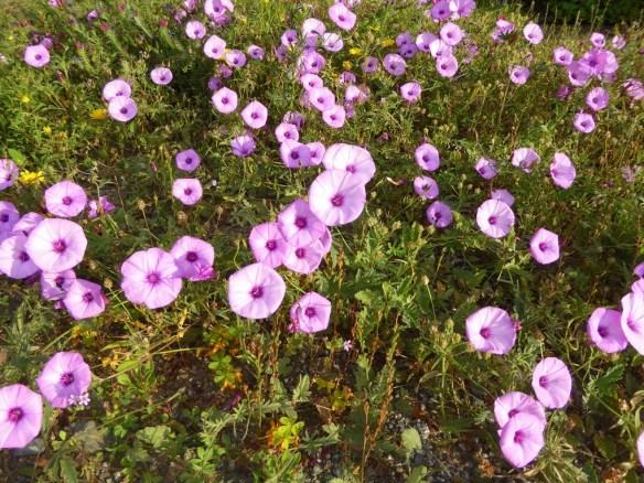 Almunecar flowers