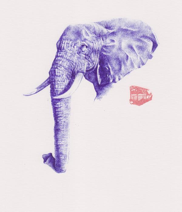 Trompe (elephant drawing)