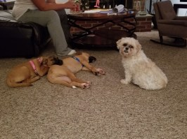 happy tails 5