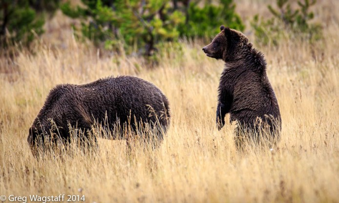 Grizzly Tales-22