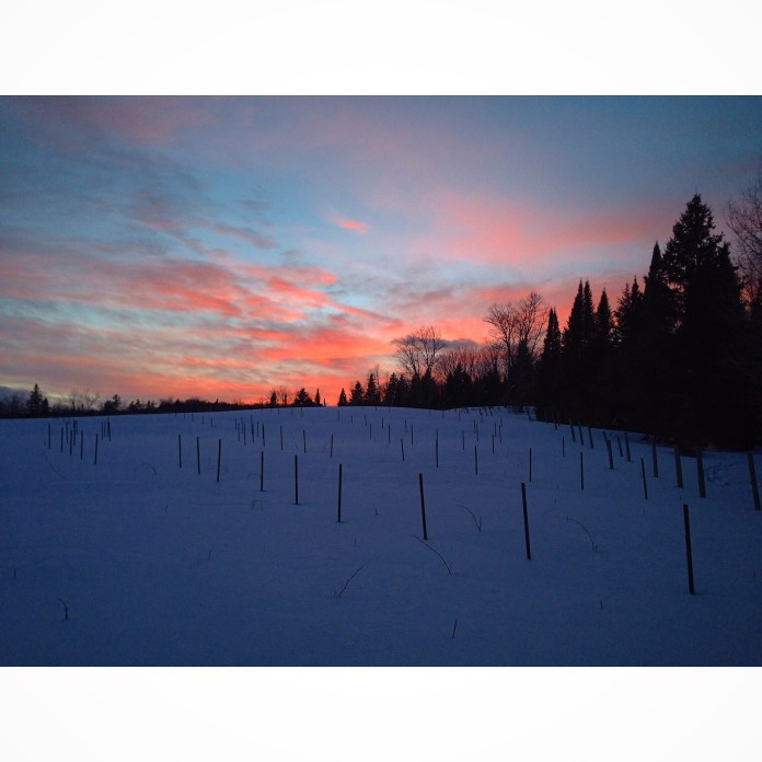Beautiful sunset captured while snowshoeing near Lake Rosseau