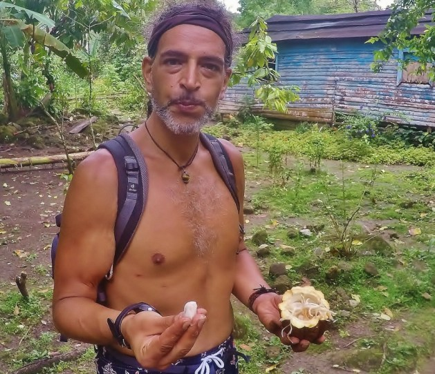 eating a raw cacao fruit in central america