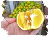 penjual buah telaga sarangan - magetan