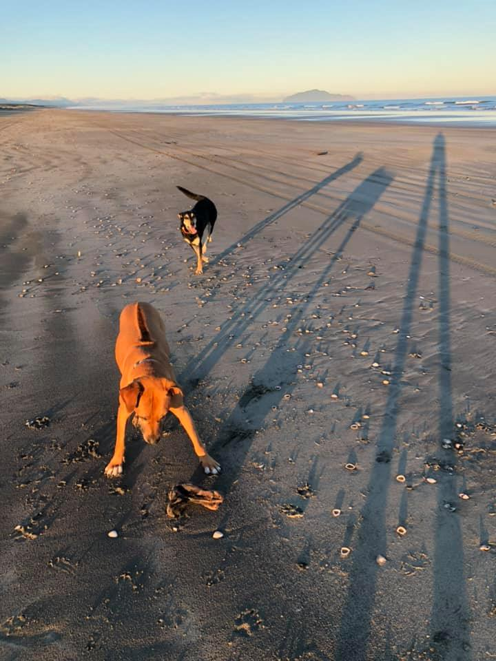Cash and Poi playing at the beach. Thanks to Bron Eichbaum for the photo.