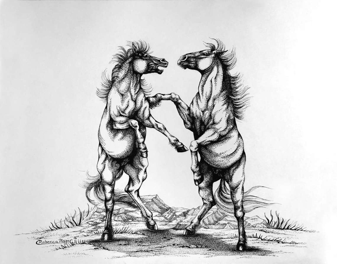 Pen and Ink Drawing of Horses Fighting by Rebecca Magar