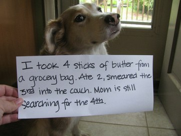 pet shame butter