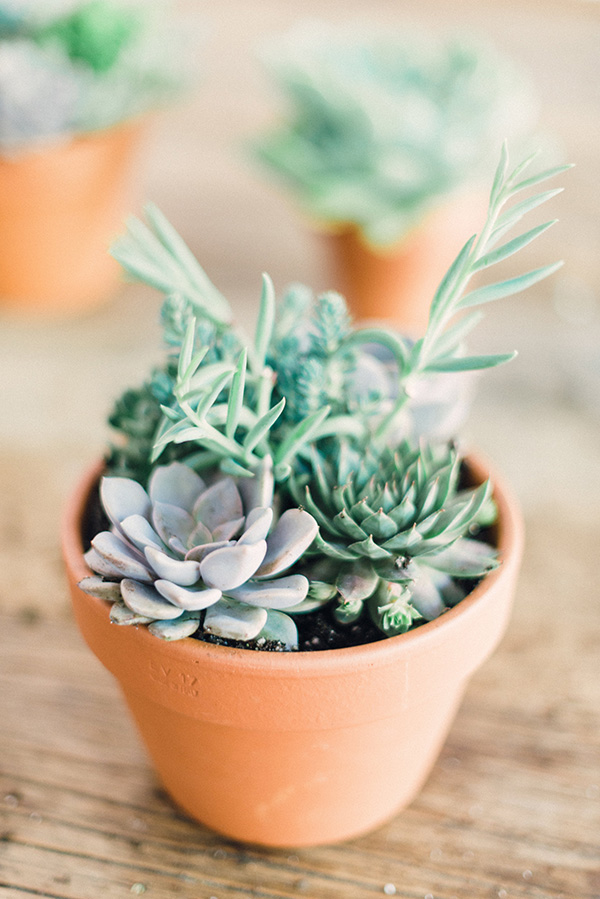 #DIY succulent arrangements