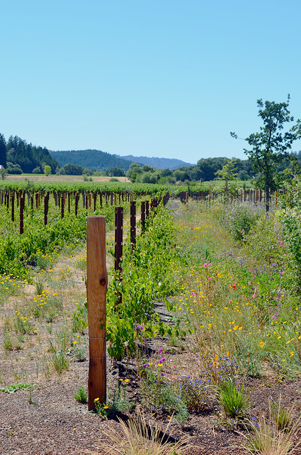 Napa Valley Guide, Waiting On Martha