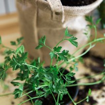 How to plant an indoor herb garden, Waiting On Martha | Photography Kathryn McCrary