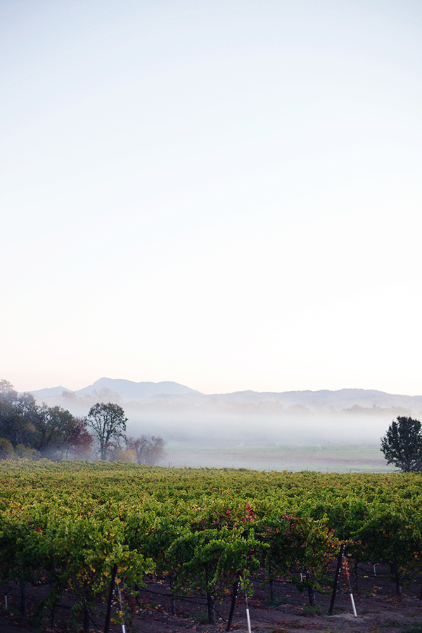 How to visit Napa Valley in style