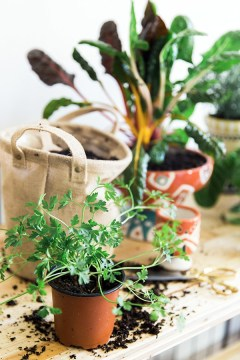 How to grow an indoor herb garden via Waiting on Martha