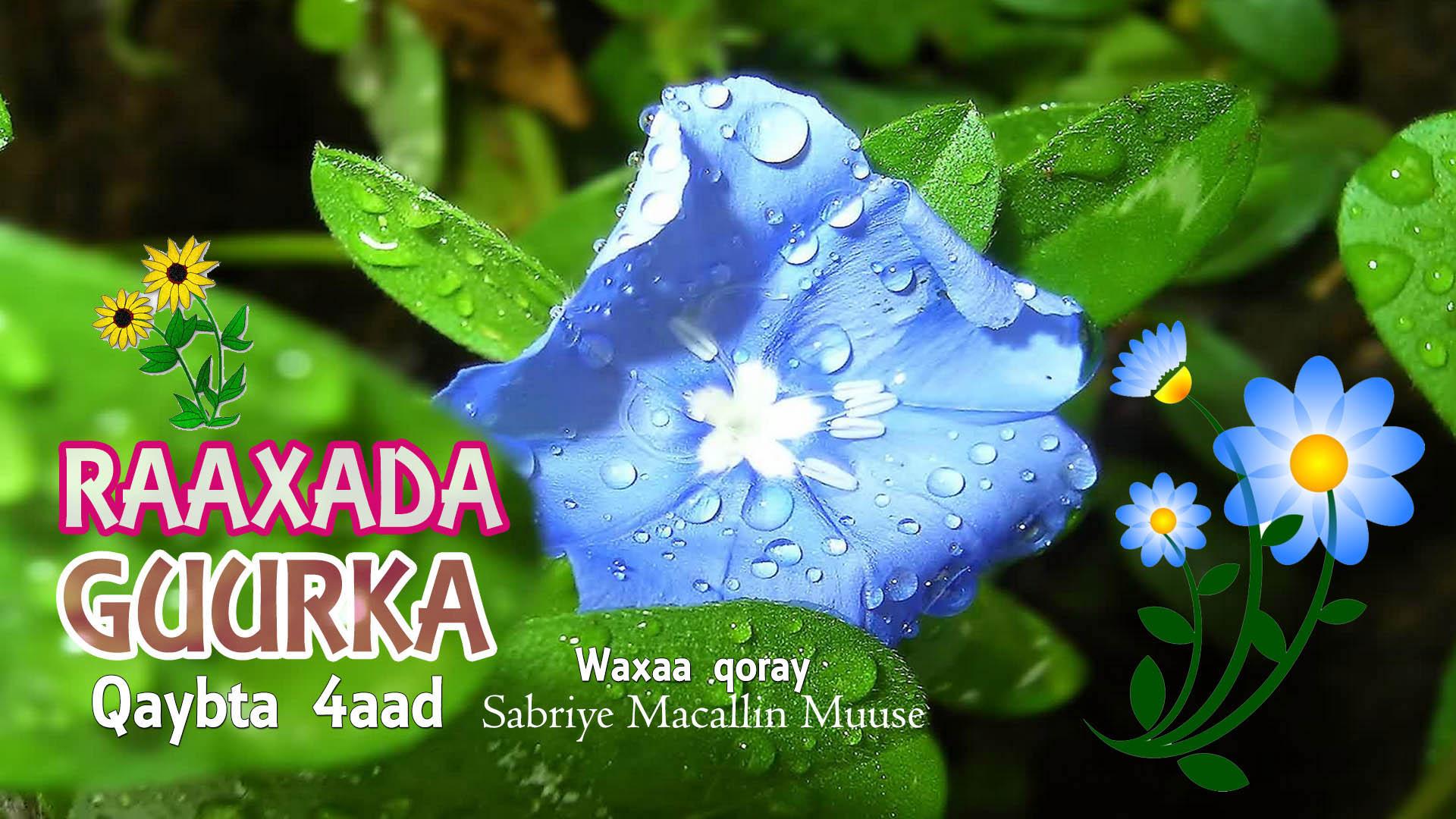 Raaxada Guurka – Qaybta 4aad