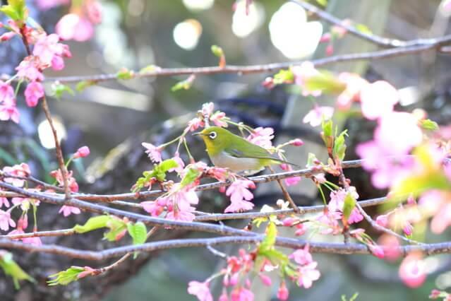 わくわく和歌ワークショップ「風雅の誠」(3月の会)