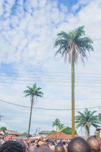 Aimamienson-Aimiuwa Palm Tree