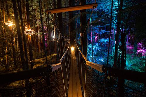 Image result for redwoods tree walk rotorua night