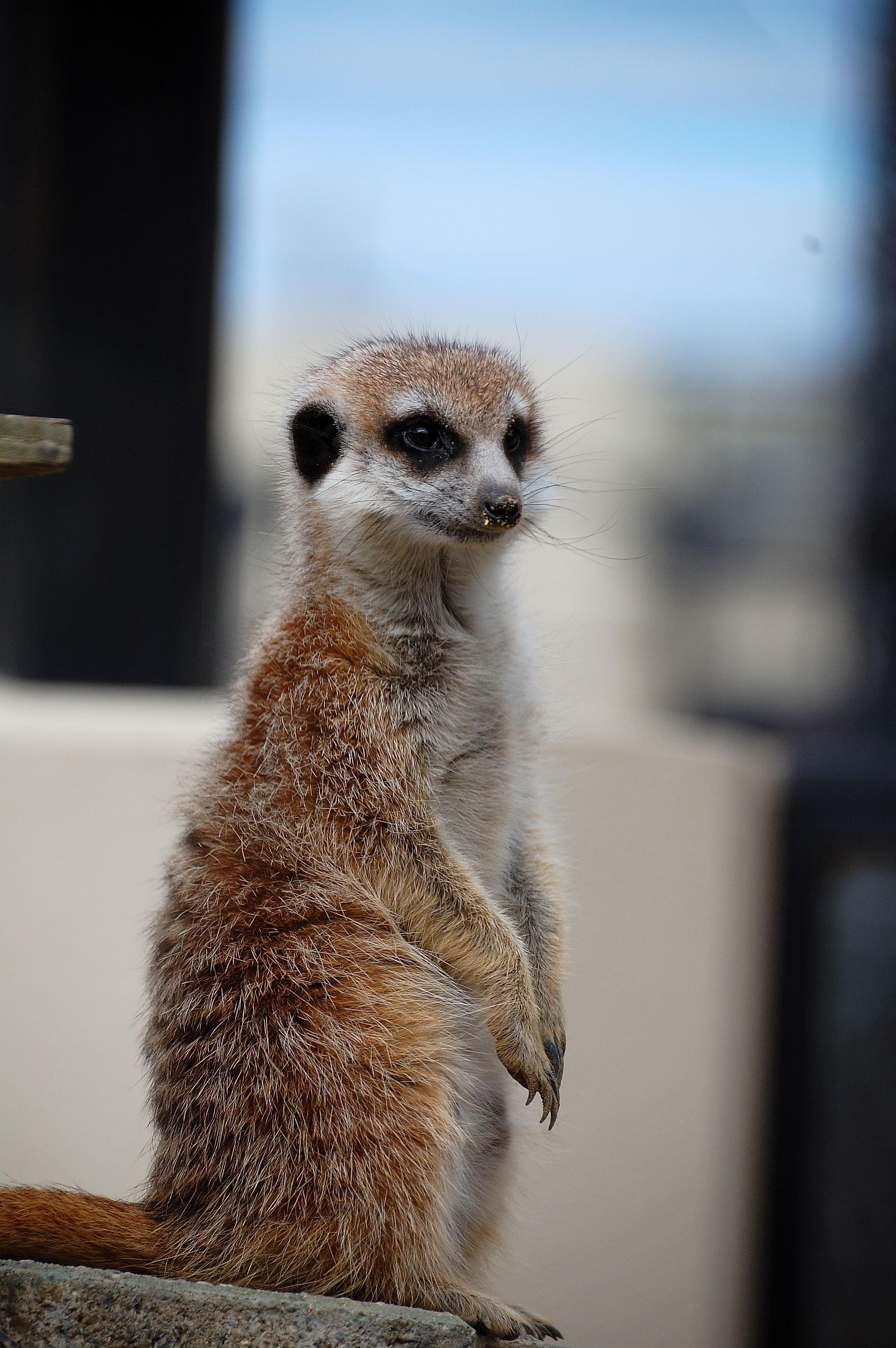 可愛い小動物たち | wakasa15thfd