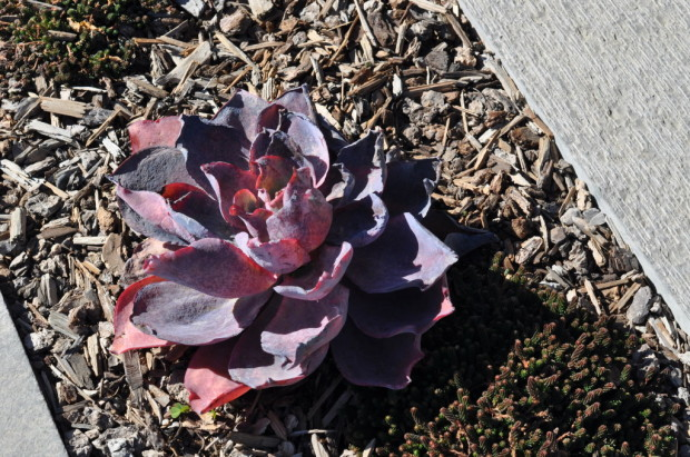 Santa Maria Valley Succulents
