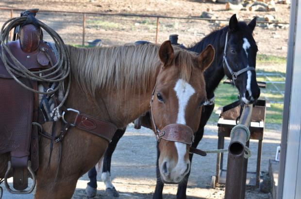 Vino Vaqueros Horses