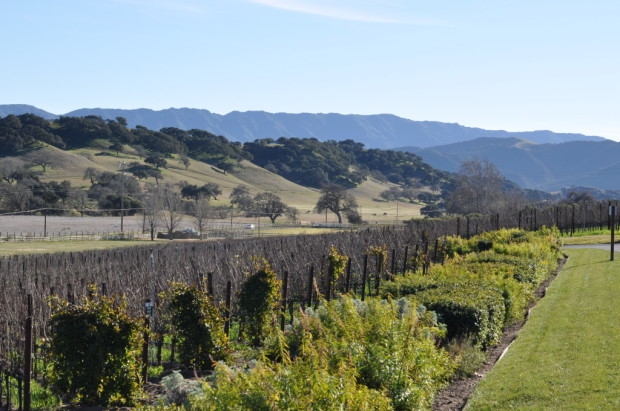 Rusack Vineyards, Ballard Canyon