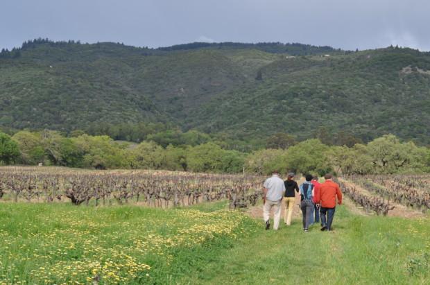Walking into Bucklin Vineyards
