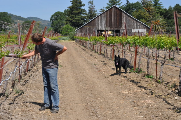 Steve and Koda examining the Ribolla at Matthiasson Vineyard