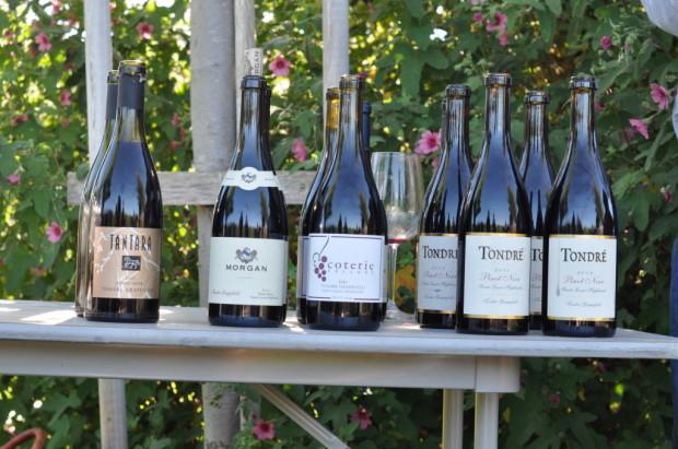 Pinots at Tondre Grapefields