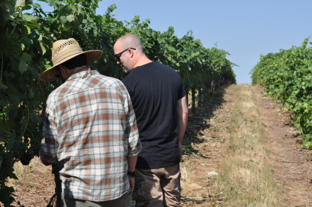 Hardy Wallace and Chris Pittenger inspecting Mourvedre