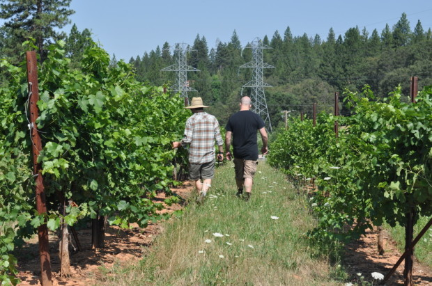 Hardy and Chris inspecting Pinot Blanc