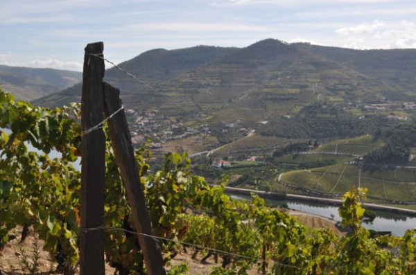 from the top of Quinta Dos Murcas