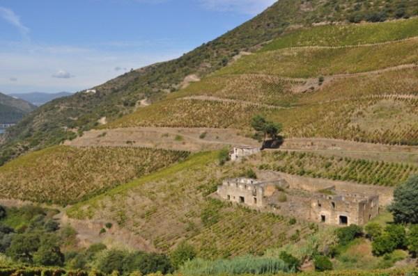 Into the ruins of Quinta Dos Murcas