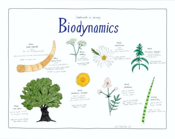 Biodynamics Poster