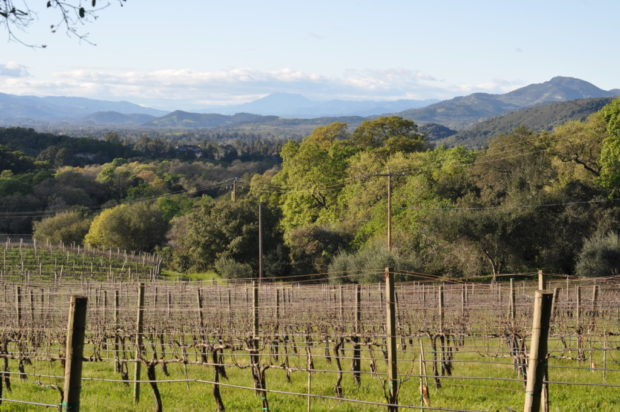 Looking southwest from Farella Vineyard in Coombsville