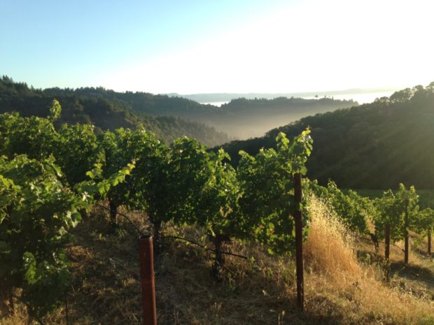 From the Mayacamas looking into Napa Valley