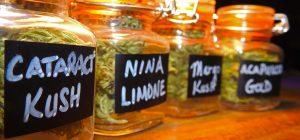 cannabis strain jars
