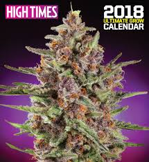 Times Not So High At High Times Recently