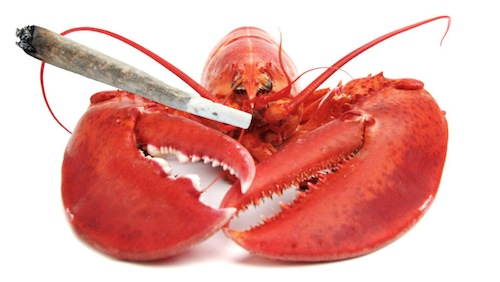 Maine Restaurant Gets Lobsters Stoned Before Killing Them