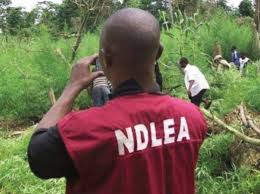 Nigeria: Big Time Weed Dealer Escapes, Police Solution, Arrest Wife