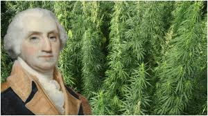 Hemp Is Back At Mount Vernon, Washington Is Smiling