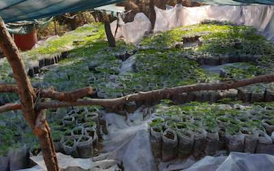 Greek Police Bust Gang Growing 10,000 Plants In Central Greece