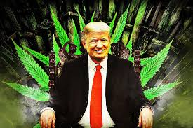 Fresh Toast Website Grades 2020 Presidential Candidates On Their Cannabis Policies